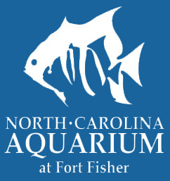 One Of The Wilmington Area S Top Attractions Nc Aquarium At Ft Fisher Explores Mid Atlantic Coastal Waters Marine Life And Wildlife Through Live